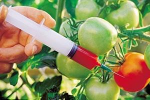 Ce sunt alimentele modificate genetic?