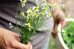 Gastrita – plante medicinale folosite in tratamentul naturist