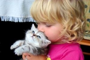 Pisicile alungă astmul şi alergiile